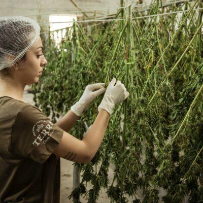 Cannabis légal